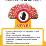 mushroom-brochure